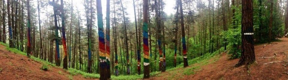 Bosque de Oma, Euskadi